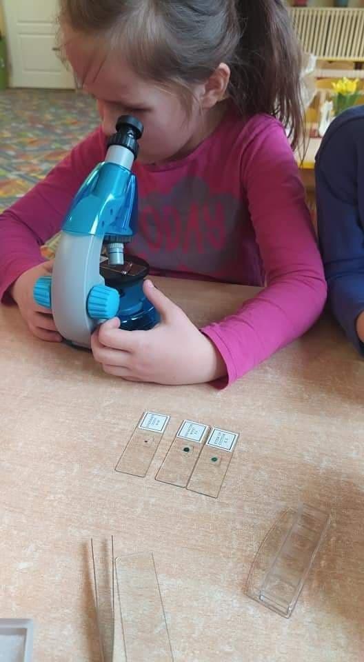 Obserwowanie preparatów przez mikroskop