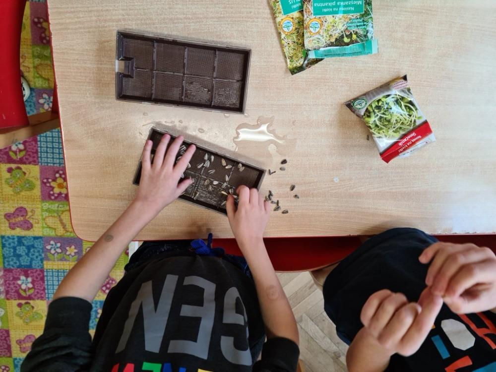 Dzieci wysiewają kiełki warzyw na kiełkownicy